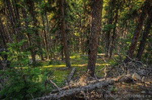 Moose Mountain Hiking Trail - The Mountains Forest